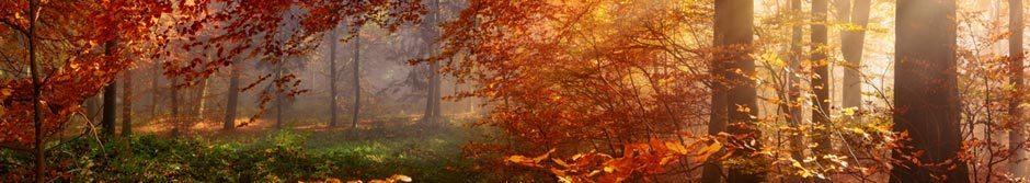 Herbstlich schöne Geschenke
