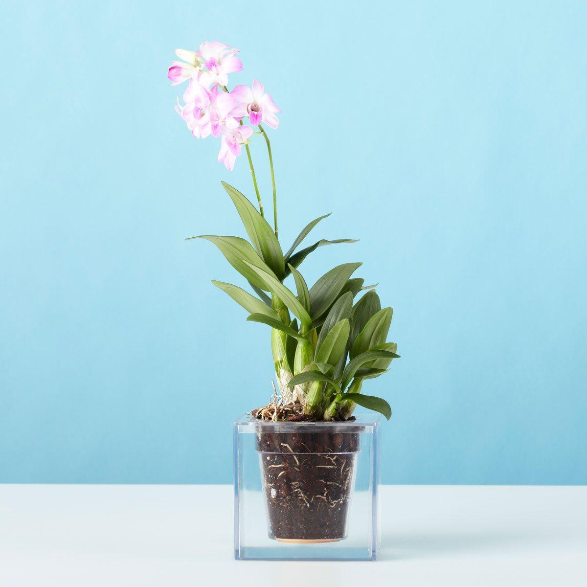 Cube - Der durchsichtige Blumentopf