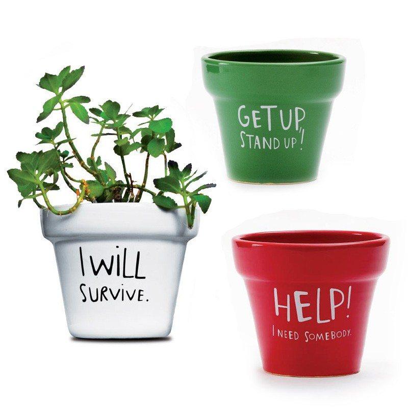 Motivation ist alles - Übertöpfe für Pflanzen